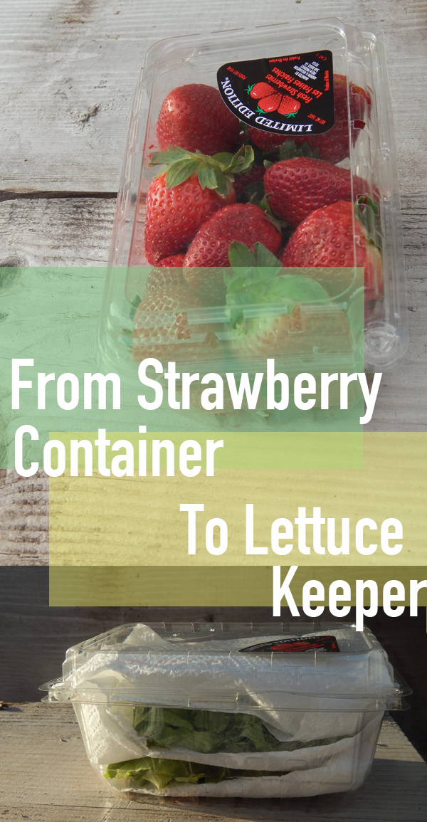Keep lettuce fresh with kitchen hack - from strawberry container to lettuce keeper
