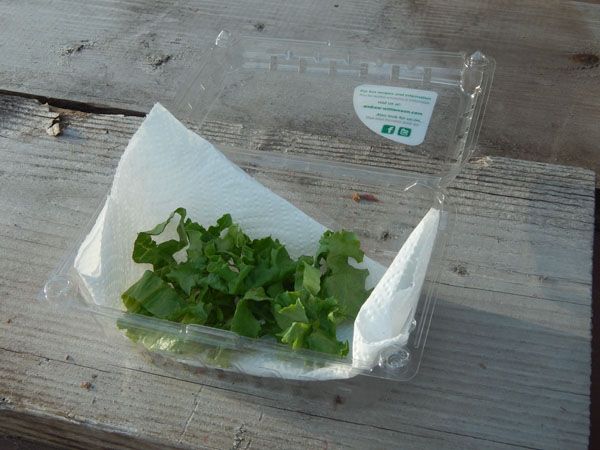 Keep lettuce fresh with simple upcycle kitchen hack